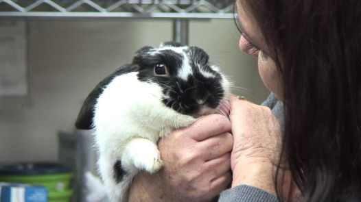Judith Pierce and fostered rabbit Lila Rose