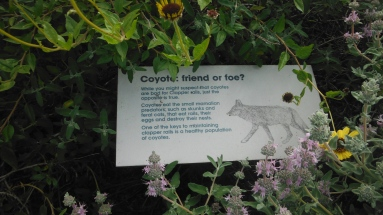 A sign at the LCDC that illustrates if a coyote is a friend or foe. Photo by Dustan Reidinger