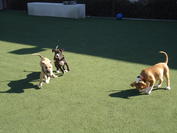 Puppies at the San Diego Humane Society have access to green space, where they can stretch their legs and run.