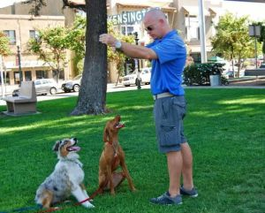 dogs are trained with Dave Tann