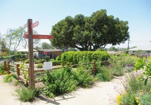 The grounds of Olivewood Gardens feature space to grow a variety of fruits and vegetables.
