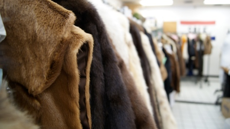 Popularity of fur vests and other accent fur pieces have been increasing over the past few years.